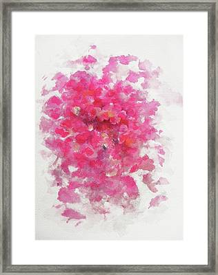 Pink Rose Framed Print by Rachel Christine Nowicki