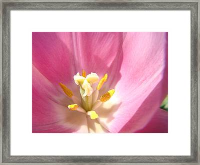 Pink Tulip Flower Prints Spring Tulips Floral Framed Print by Baslee Troutman