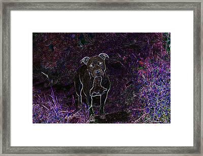 Pitty In Purple  Framed Print by Travis Crockart