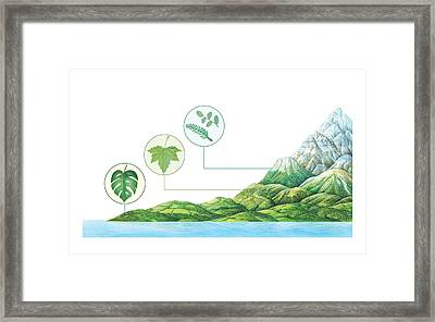 Plant Communities, Artwork Framed Print by Gary Hincks