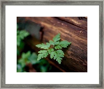 Plant On Log Framed Print by Marcio Faustino
