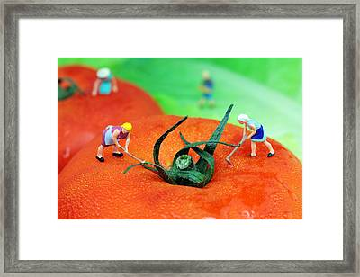Planting On Tomato Field Framed Print by Paul Ge