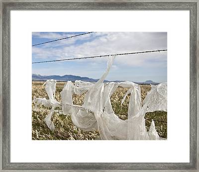 Plastic Garbage Bag On A Wire Fence Framed Print by Paul Edmondson