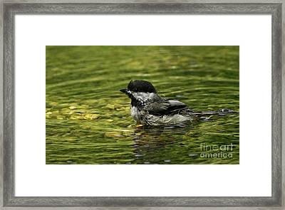 Playful Moments Framed Print by Inspired Nature Photography Fine Art Photography