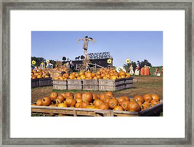 Plenty Of Pumpkins Framed Print by Sally Weigand