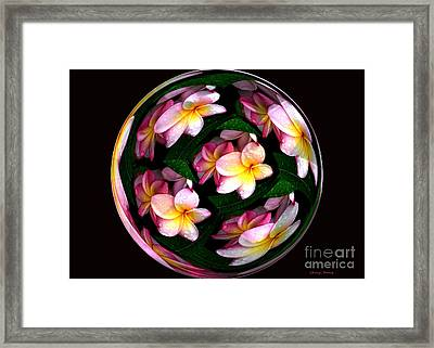 Plumeria Tile Ball Framed Print by Cheryl Young