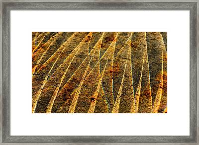 Points Of Light Framed Print by Susan Capuano