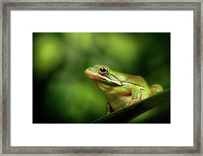 Poised Framed Print by MarkBridger
