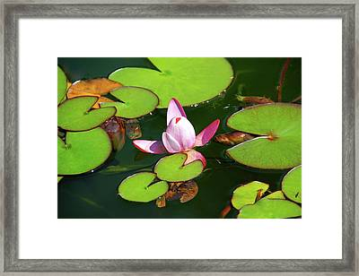 Polish Beauty Framed Print by Mariola Bitner