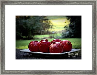 Pomegranates On White Platter 3 Framed Print by Tanya  Searcy