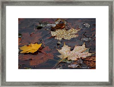 Pond Leaf Dew Drops Framed Print by LeeAnn McLaneGoetz McLaneGoetzStudioLLCcom