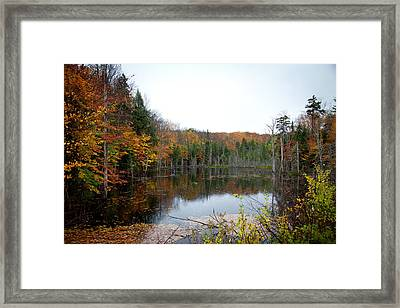 Pond On Limekiln Road In Inlet New York Framed Print by David Patterson