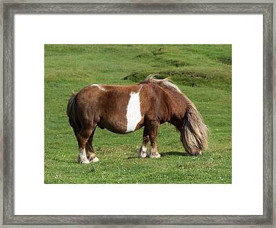 Pony Framed Print by George Leask
