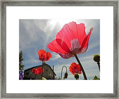 Poppies And Sky Framed Print by Robert Meyers-Lussier