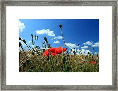 Poppies Framed Print by Frans Schalekamp