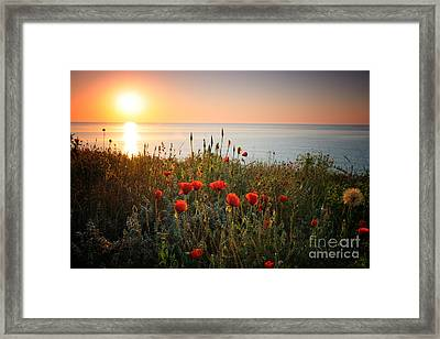 Poppies In The Sunrise Framed Print by Ionut Hrenciuc