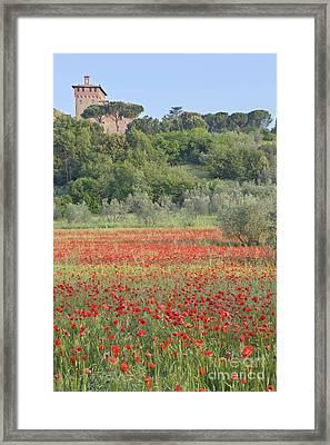 Poppy Field Framed Print by Rob Tilley