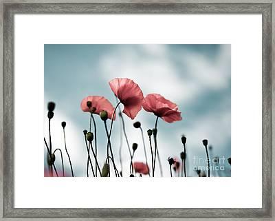 Poppy Flowers 07 Framed Print by Nailia Schwarz
