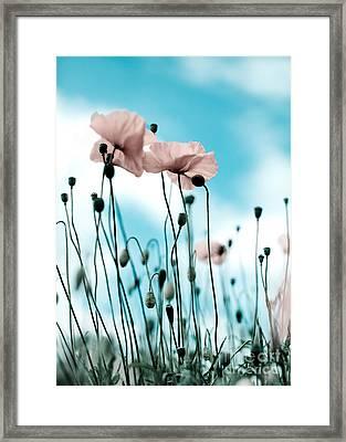 Poppy Flowers 09 Framed Print by Nailia Schwarz