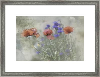 Poppy Photo Framed Print by Carolyn Dalessandro