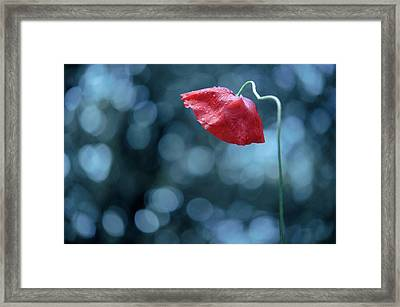 Poppy With Dew Drops Framed Print by Alexandre Fundone