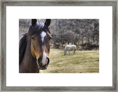 Portrait Of A Horse Framed Print by Philippe Widling