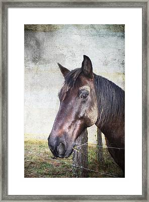Portrait Of A Horse Series V Framed Print by Kathy Jennings