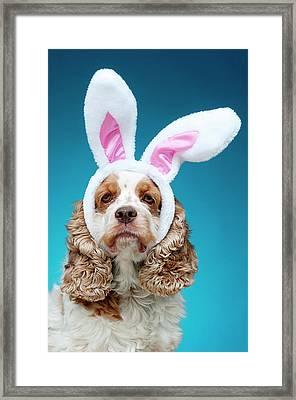 Portrait Of Dog Wearing Easter Bunny Ears Framed Print by Jade Brookbank