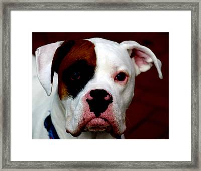 Portrait Of Her Best Friend  Framed Print by Steven  Digman