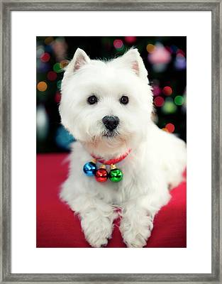 Portrait Of Puppy Framed Print by Paul L. Harwood