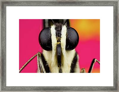 Portrait Shot Of Lime Butterfly Framed Print by Up Close With Nature