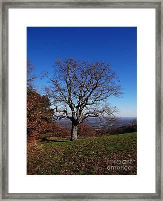 Posing  Framed Print by Steven Lebron Langston