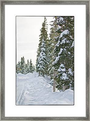 Powdery Snow Path Framed Print by Lisa  Spencer