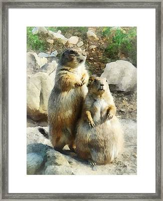 Prairie Dog Formal Portrait Framed Print by Susan Savad