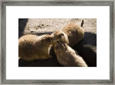 Prairie Dog Gossip Session Framed Print by Trish Tritz
