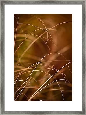 Prairie Grasses Number 4 Framed Print by Steve Gadomski