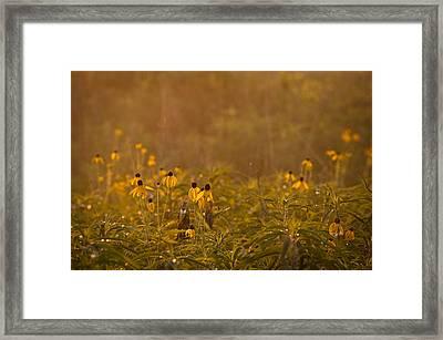 Prairie Wildflowers Framed Print by Steve Gadomski