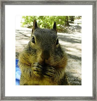 Praying Nuts Framed Print by DJ Laughlin