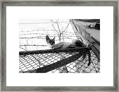 Precarious Framed Print by Dean Harte