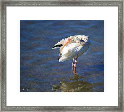 Preening The Evening Ritual  Framed Print by Roena King