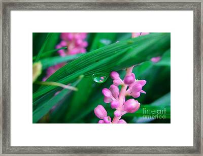 Pretty In Pink  Framed Print by Peggy  Franz