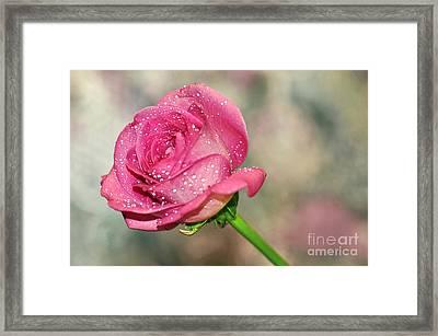 Pretty Rose Framed Print by Kaye Menner