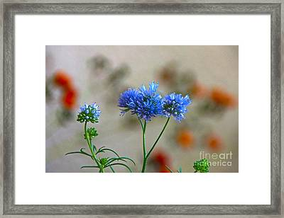 Pretty Weeds Framed Print by Byron Varvarigos