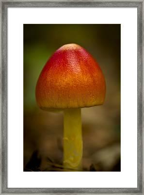 Pretty Wild Thing Framed Print by Kim Henderson