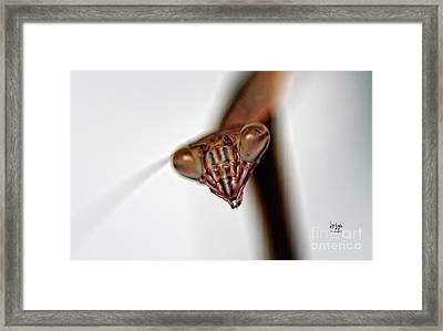 Preying Framed Print by Lois Bryan