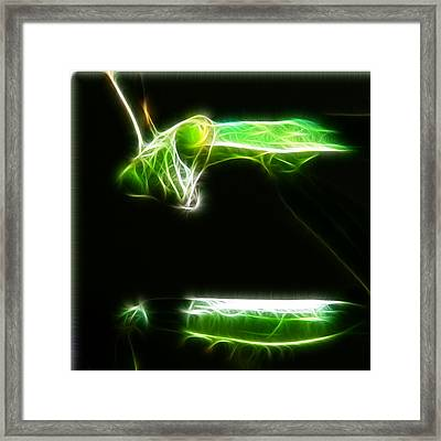 Preying Mantis Framed Print by Paul Ward