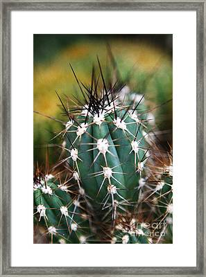 Prickly  Framed Print by Leslie Leda