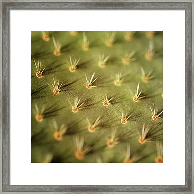Prickly Pear Cactus Framed Print by Pamela N. Martin