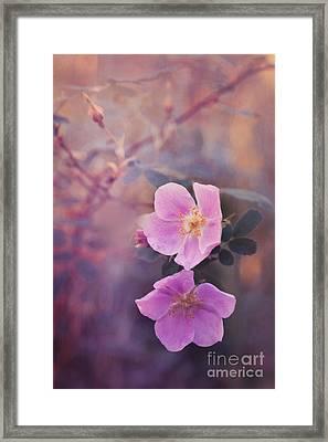 Prickly Rose Framed Print by Priska Wettstein