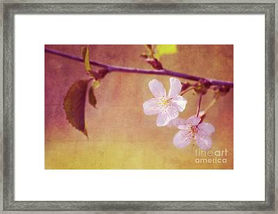 Primavera Framed Print by Angela Doelling AD DESIGN Photo and PhotoArt